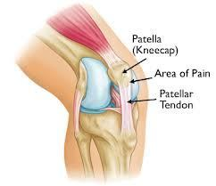 pateller-tendon-